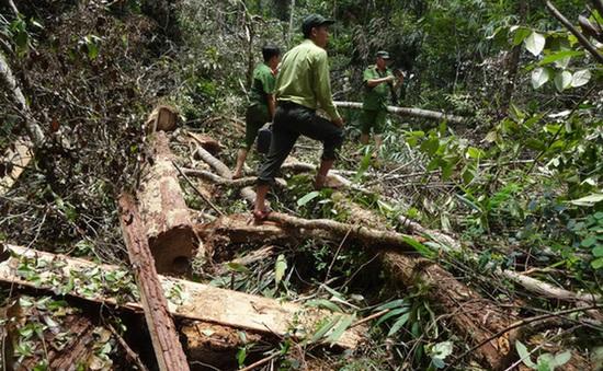 """Phóng viên Huy Kha: """"Phá rừng Pơ mu là cảnh phá rừng khủng khiếp nhất mà tôi từng thấy"""""""
