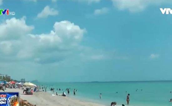 Rận biển lan tràn tại biển Florida (Mỹ)