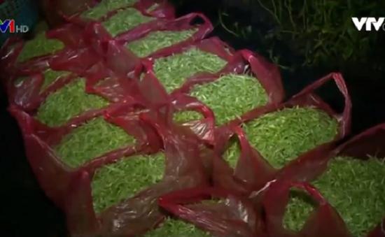 Phát hiện hơn 1,5 tấn rau muống ngâm hóa chất độc hại