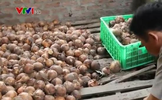"""Cơ sở mua rau không rõ nguồn gốc """"tuồn"""" vào siêu thị bị phạt 5 triệu đồng"""