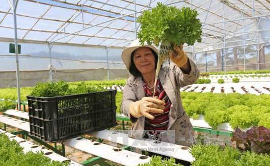 Malaysia có thể phải nhập rau từ Việt Nam