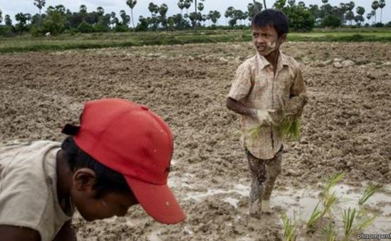 2,5 triệu người Campuchia bị ảnh hưởng do hạn hán