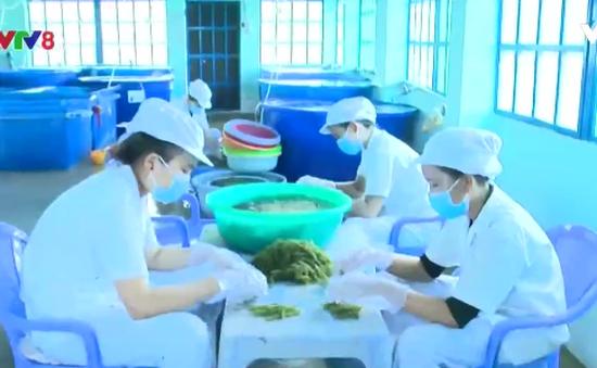 Quy hoạch vùng trồng rong nho phục vụ xuất khẩu