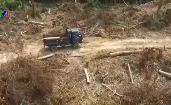 """Quảng Bình: Xe tải lâm tặc vào tận """"chân công trình"""" để chuyển gỗ"""