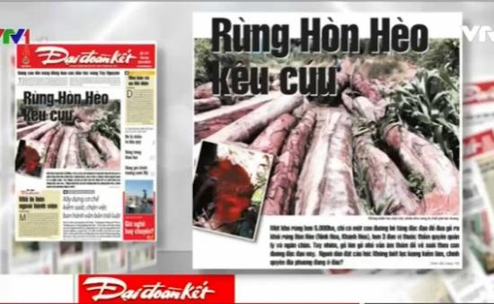 """Điểm báo 20/6: Rừng Hòn Hèo (Khánh Hòa) đang """"kêu cứu""""!"""
