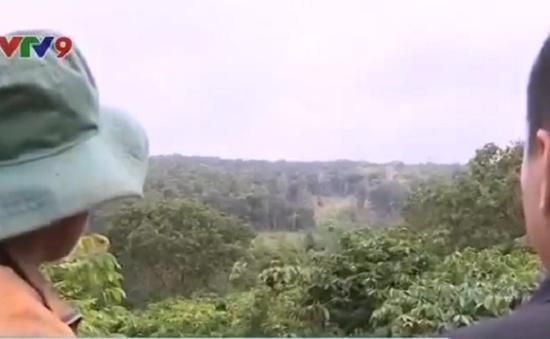 Giữ rừng hiệu quả với giao khoán rừng cho người dân