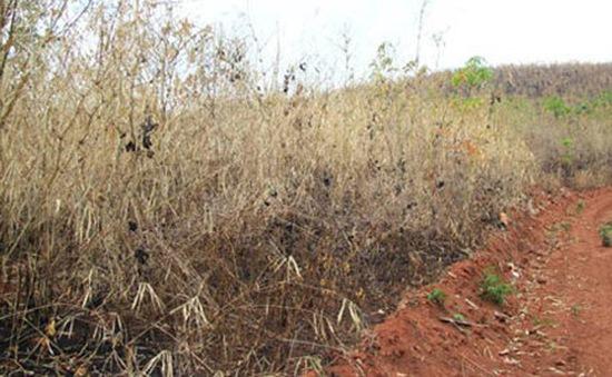 Thanh Hóa: Chuyển đổi rừng phòng hộ để trồng cao su