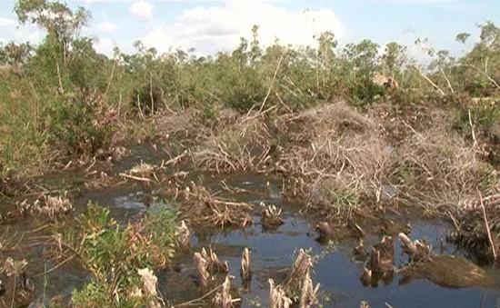 Rừng U Minh Hạ có nguy cơ nhiễm mặn