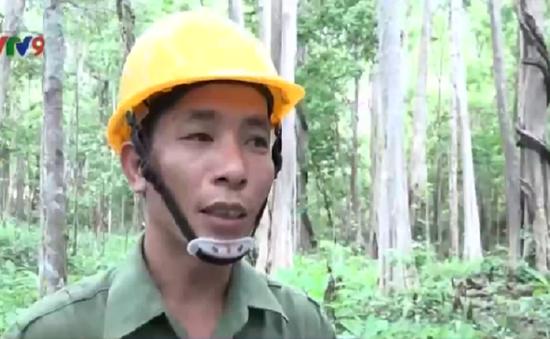 Các công ty lâm nghiệp gặp khó khi đóng cửa rừng