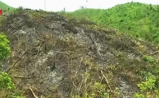 Quảng Ninh: Xử lý nghiêm tình trạng phá rừng tại Hoành Bồ