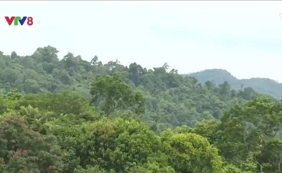 Độ che phủ rừng Việt Nam đạt 40,84%