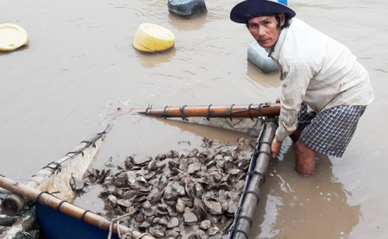 Hàng loạt vụ tranh chấp, cướp thủy sản vùng bãi bồi ĐBSCL
