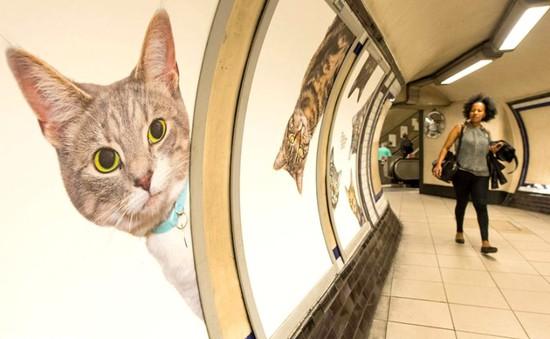 """Hàng trăm chú mèo """"chiếm lĩnh"""" ga tàu điện ngầm tại London"""