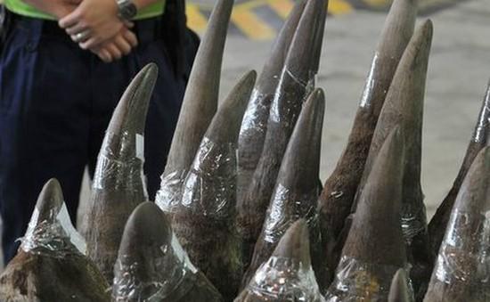 Mozambique thu giữ gần 80 kg sừng tê giác tại sân bay