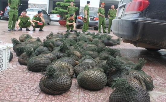 Hưng Yên: Bắt giữ một xe ô tô vận chuyển hơn 300kg tê tê
