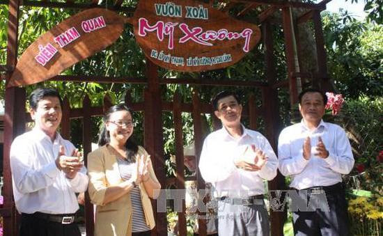 Tham quan, trải nghiệm tại vườn xoài - mô hình du lịch mới ở Đồng Tháp