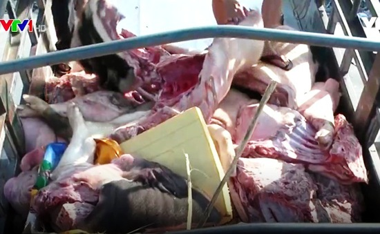 Gia tăng tình trạng vận chuyển thịt bẩn vào Bình Định