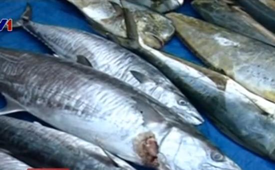 TT-Huế cấp giấy phép xác nhận thủy, hải sản xa bờ đảm bảo an toàn