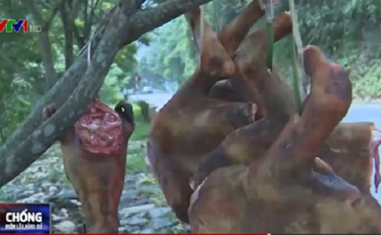 Công khai săn bắt, buôn bán động vật hoang dã trái phép tại Lào Cai