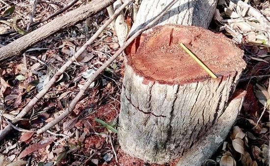 Kỷ luật đảng viên liên quan đến vụ phá rừng ở Phú Yên