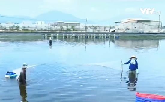 Tổng cục Thủy sản thừa nhận bán giấy lưu hành cho 800 sản phẩm kém chất lượng