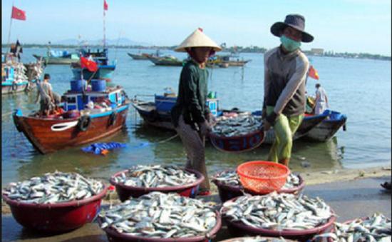 Gần 7.500 hộ nông dân tham gia bảo hiểm thủy sản