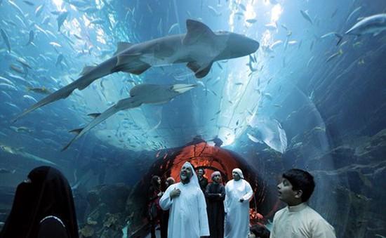 Tuần lễ cá mập tại UAE