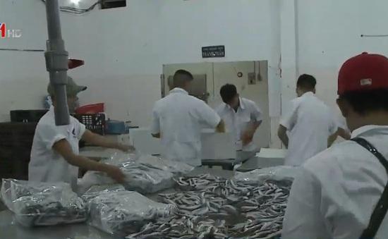 Doanh nghiệp tiếp tục thu mua hải sản cho ngư dân