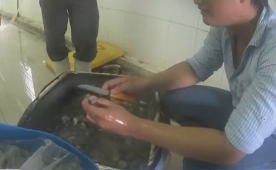 Bạc Liêu: Bắt quả tang hai vụ bơm tạp chất vào tôm