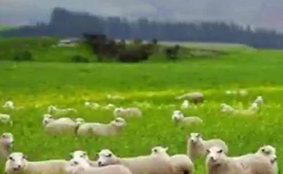 Người Việt chi triệu đô mua trang trại tại Australia