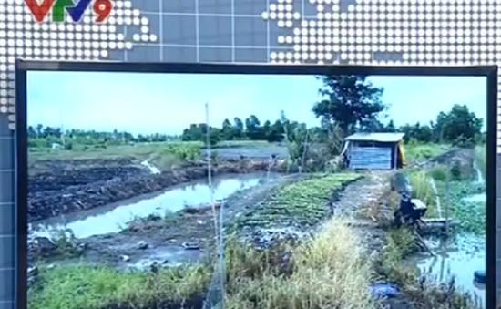 Trộm nông sản lộng hành tại Hậu Giang