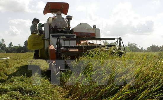 Nông dân ĐBSCL được mùa, trúng giá lúa Đông Xuân