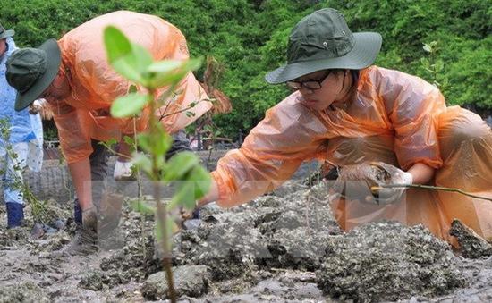 TT-Huế: Trồng cây ngập mặn thích ứng với biến đổi khí hậu