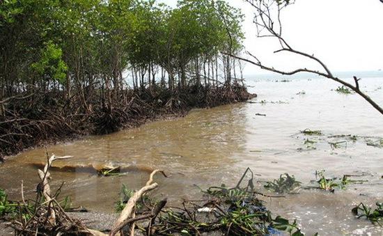 Đê biển Gò Công trước nguy cơ biến mất
