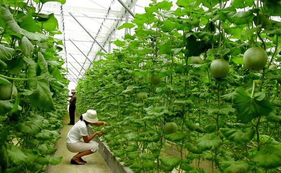 Nút thắt về vốn làm chậm quá trình tái cơ cấu nông nghiệp