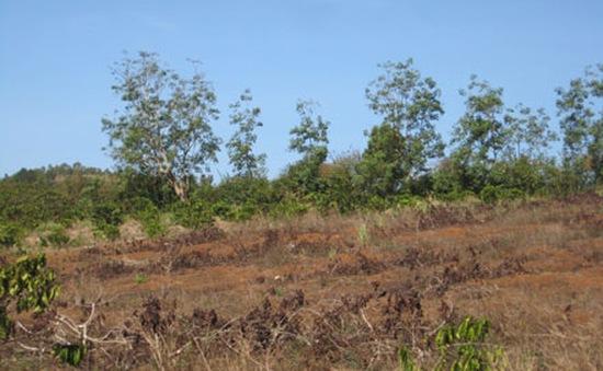 Hà Nội hỗ trợ 19 tỷ đồng cho các địa phương bị hạn hán, ngập mặn