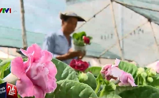 Hoa Tết tại Đồng bằng sông Cửu Long: Thay sắc để tồn tại?