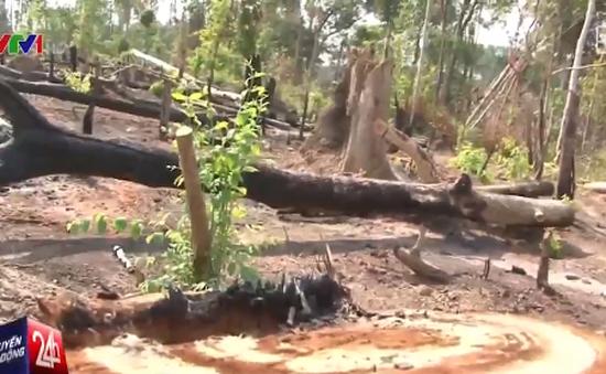 Rừng phòng hộ bị tàn phá ở Gia Lai