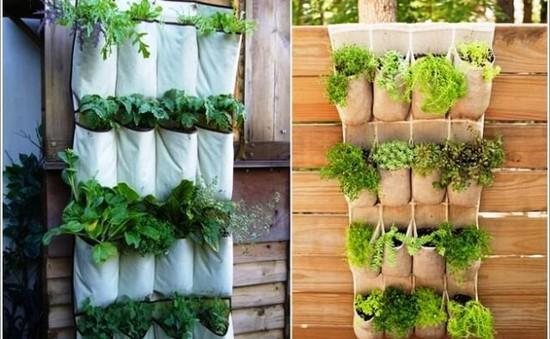 Kinh nghiệm tạo mảng xanh cho nhà phố