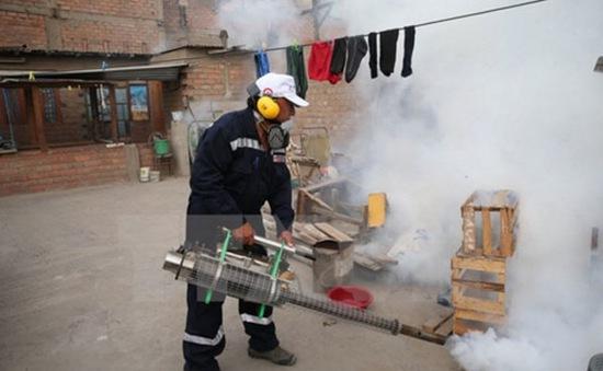 WHO cảnh báo nguy cơ bùng phát virus Zika tại châu Âu