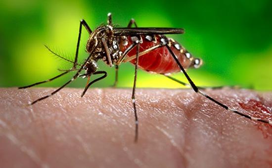 WHO cảnh báo nguy cơ Zika lan rộng tại châu Á - Thái Bình Dương