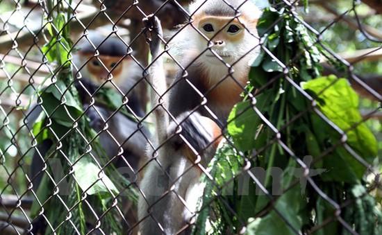 Báo động đỏ nạn săn bắt động vật hoang dã trái phép ở Lào Cai