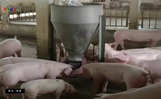 Phát hiện chất cấm mới Cysteamine trong chăn nuôi