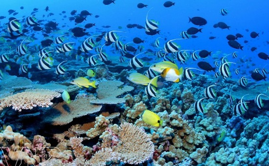 Hơn 90 nước cam kết hàng tỉ USD bảo tồn sinh thái biển
