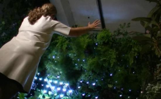 Cây quấn quýt với người ở vườn sinh học tương tác đầu tiên trên thế giới