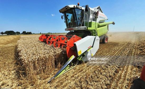 Các nước Tây Âu mất mùa lúa mì