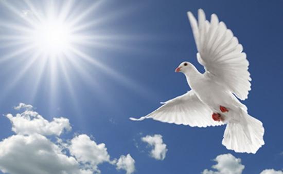 Café Sáng với VTV3: Chuyện về Ngày quốc tế hòa bình (21/9)