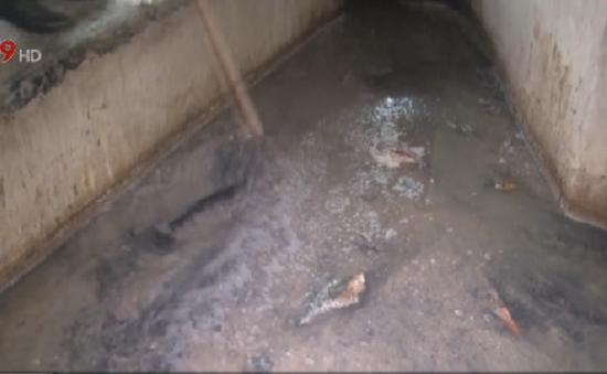 Bắt nhiều cơ sở hải sản xả thải ra môi trường tại Bà Rịa - Vũng Tàu