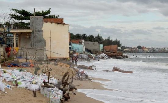 Lúng túng tìm giải pháp khắc phục biển xâm thực ở Ninh Thuận