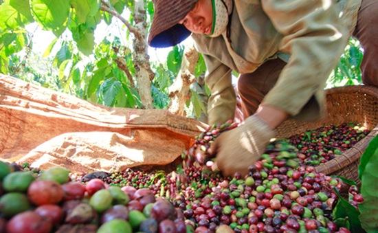 Xuất khẩu cà phê lấy lại đà tăng trưởng